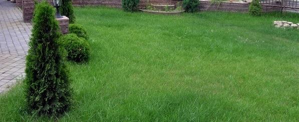 фото ровного газона в саду 12 соток