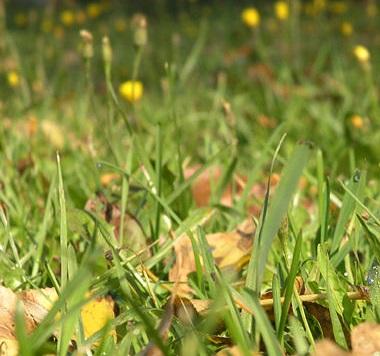 как ухаживать за газоном в октябре