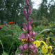 Лилейное дерево: фото иллюзия или правда?