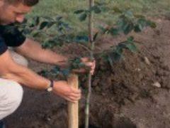 Технология посадки деревьев и кустарников в весенний период
