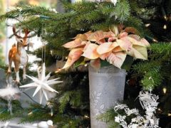 Рождественские растения — чем украсить дом к Рождеству и Новому 2017 году?