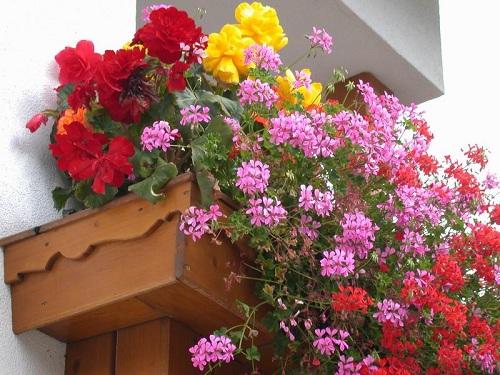Хризантемы разнообразие сортов и названия белых и желтых