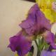 Цветы для балкона: как оформить балкон цветами