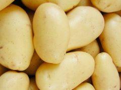 Картофель из семян: как правильно сажать