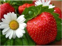 Выращивание клубники в открытом грунте: от рассады до ягоды