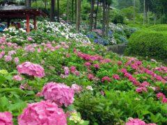 Японская азалия садовая: способы выращивания, борьба с вредителями