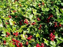 Посадка деревьев весной  как сажать плодовые деревья