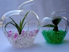 Гидрогель для цветов и домашних растений: инструкция