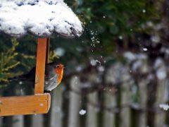 Кормушка для птиц своими руками (с фото)
