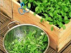 Как устроить огород на балконе городской квартиры?
