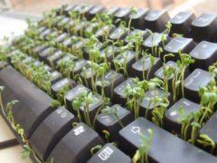 Стратификация семян: как правильно рассчитать срок начала стратификации?
