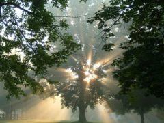 Дерево по знаку зодиака — подбери свое и посади!