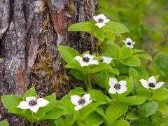 Какие теневыносливые цветы можно сажать в тени под деревья?