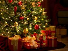 Новогодние елки. Что купить: ель, сосну или пихту?