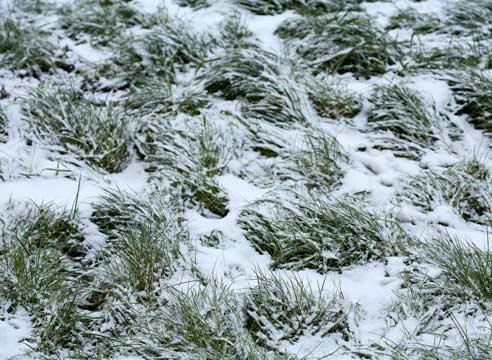 правила ухода за газоном зимой