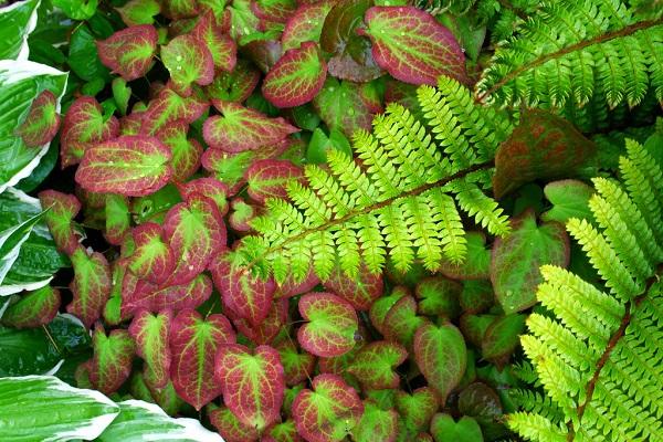 список почвопокровных цветов какие посадить