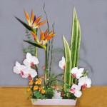орхидея в экибане