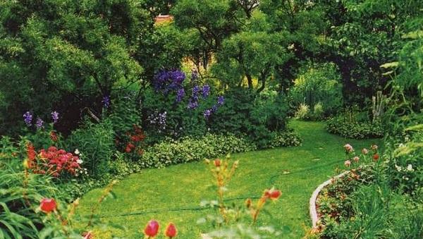 зеленчук цветок обыкновенный