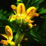 почвопокровные для сада