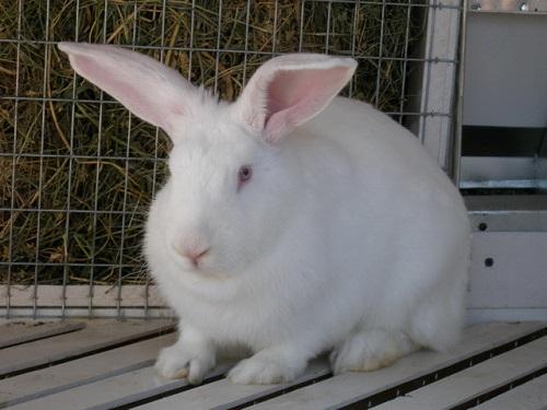 хлев для кроликов как построить