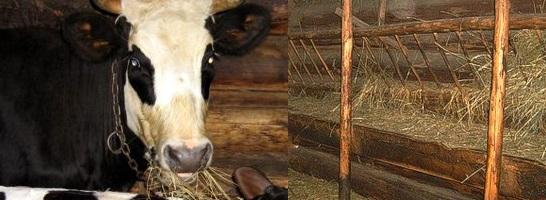 Как сделать корову в домашних условиях