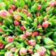 Тюльпаны – правила высадки