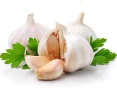 Выращивание чеснока на грядке – все секреты