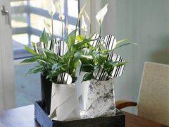 Спатифиллум уход в домашних условиях