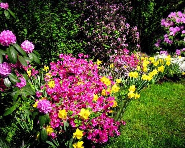 какие растения цветут в месяце мае юг россии сибирь