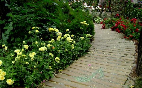 фото роз флорибунда в ландшафте