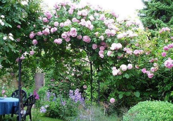 розы Остина в ландшафтном дизайне фото
