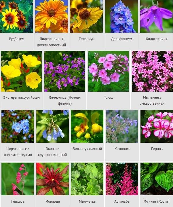 название садовых цветов по алфавиту с фото