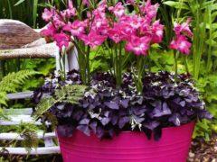 Декоративные цветы в горшках, фото