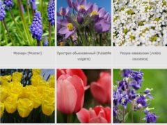 Декоративные цветы, фото с названиями