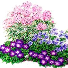 Клумбы на даче — фото по оформлению дизайна клумб и цветников