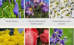 Роскошь клумбы непрерывного цветения