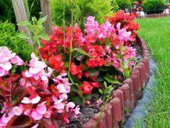 Какие цветы посадить на даче цветущие все лето