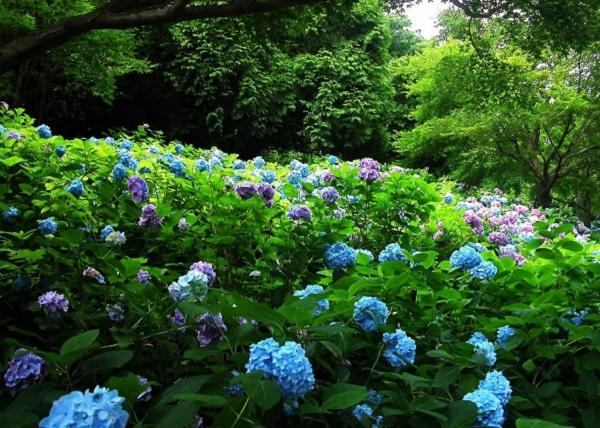 Синие цветы фото растения с синими