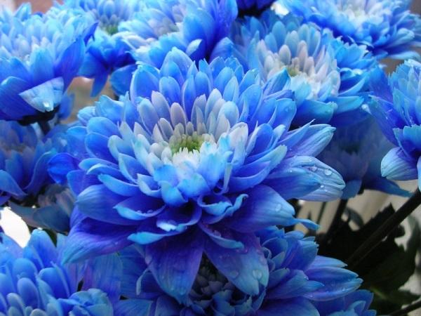 Синие цветы на 82