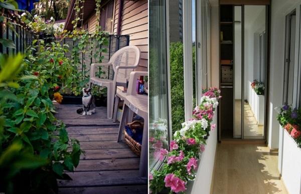 какие цветы посадить летом на балконе
