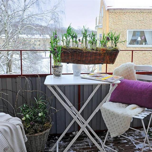 весной на балконе цветут луковичные