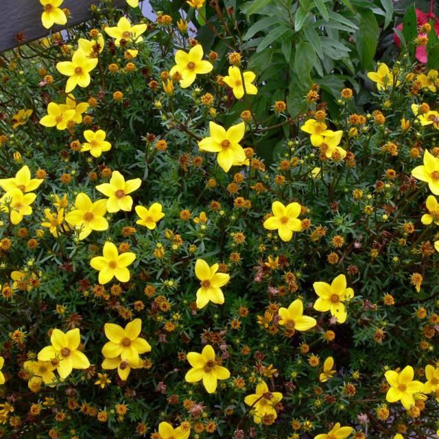 какие цветы посадить на тенистом балконе с северной стороны