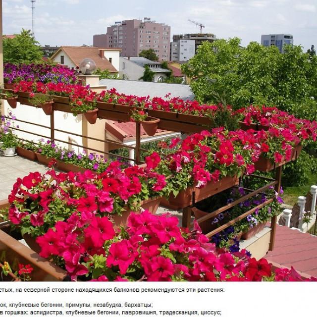cvety-na-balkone6