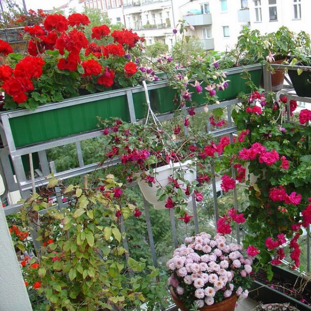 Цветы на балконе: лучшая коллекция фото как украсить балкон.