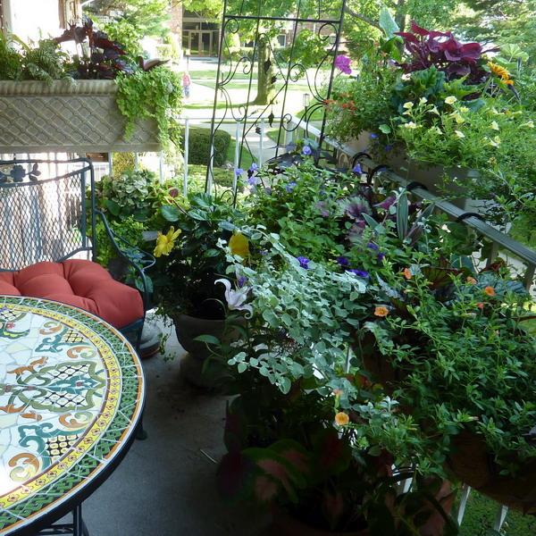 цветы на балконе дизайн