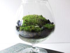 Домашний флорариум своими руками