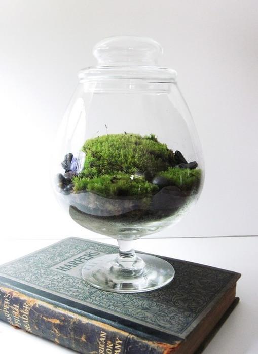 флорариум в домашних условиях фото