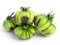 О болезнях томатов и способах их лечения