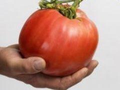 Когда сеять томаты на рассаду в 2018 году