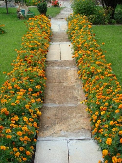 Как сажают цветы ноготки 94